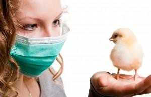 Vogelgrippe bei Mardern